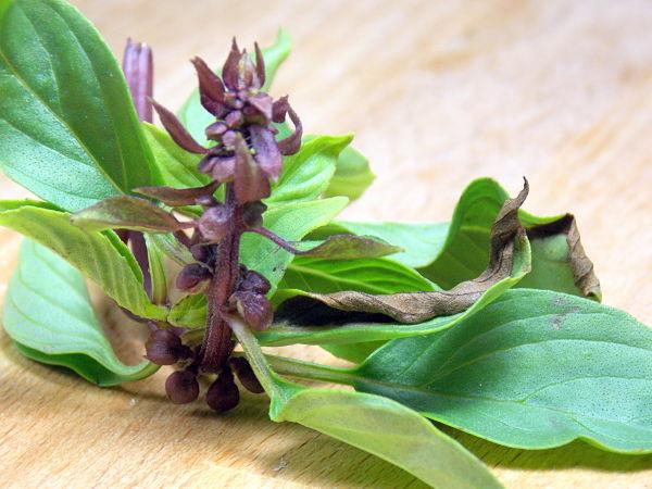 Thai Basil Flower_opt