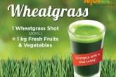 Wondrous Ways With Wheatgrass